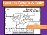 A+ Spiders:  Label The Parts Of A Spider