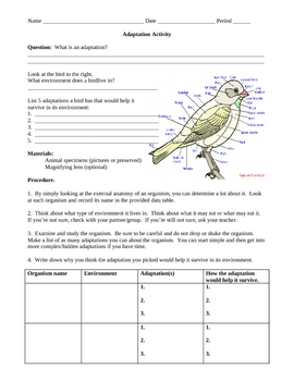 Adaptations Activity:  Finding Adaptations in Organisms