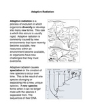 Adaptive Radiation Common Core Activity