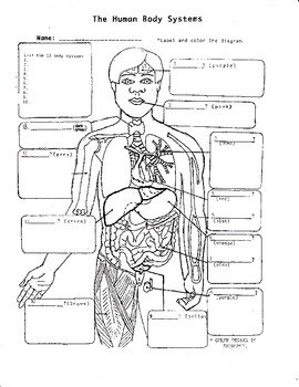 The Human Body Systems #1