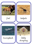 Animal Baby Matching Cards