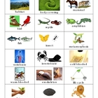 Animal Groups & Life Cycles Vocabulary TicTacToe Learning Game