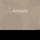 Animal Kingdom Overview PowerPoint Lesson Plan