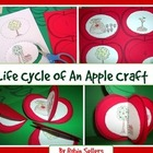 Apple Craft: {Life Cycle of an Apple Craftivity}