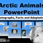 Arctic Animals PowerPoint~ Photographs, Facts and Adaptations