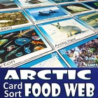 Arctic Food Chain & Food Web Card Sort