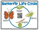 Augmented Reality Butterfly Life Cycle