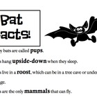 Bat Facts (Fill in the Blank + Answer Key)
