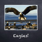 Birds Vol. 05: Eagles - PowerPoint Slideshow Presentation