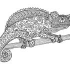 Black & White Detailed Chameleon Coloring Sheet