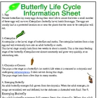 Butterflys Life Cycle Information and Worksheet