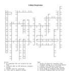 Cellular Respiration Vocabulary Mastery and Crossword Puzzle
