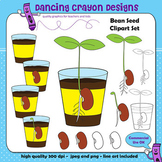 Clipart: Bean Seed, Bean Sprouts, and Seedlings