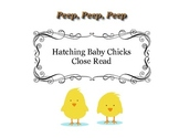 Close Reading ~ Hatching Baby Chicks: Expository Text Response