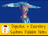Digestive and Excretory System Foldables & Notes Sheet
