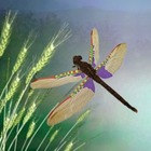 Dragonfly Life Cycle and Metamorphosis