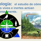 Ecología/Ecology Vocabulary (Spanish)