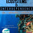 Ecosystems and Interdependence for Interactive Notebooks