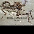 Evidence of Evolution PowerPoint Presentation