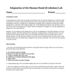 Evolution  Adaptation of the Human Hand Laboratory Lesson Plan