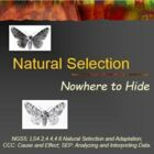 Evolution Natural Selection Peppered Moths (3)