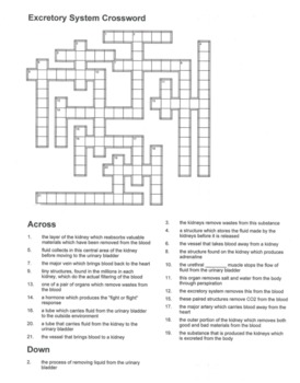 Excretory / Urinary System Crossword Puzzle