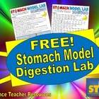 FREE Stomach Model Digestion Lab