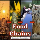 Food Chains {Animals, Energy and Food Chains} PowerPoint