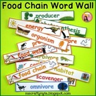 Food Chains and Food Webs - Illustrated Word Wall