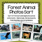 Forest Animals Photos Sort