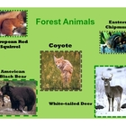 Forest PPT