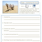 Free- My First Report -Writing Activity