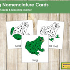 Frog Nomenclature Cards