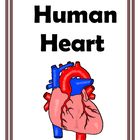 Human Heart Games and Activities for Middle School