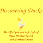 Hatching Ducks Powerpoint