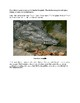 History of the Everglades for Kids