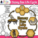 Honey Bee Life Cycle Clipart - Glitter Biology Life Scienc