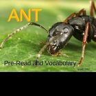 "Houghton Mifflin:  2nd Grade ""Ant""  Preread and Vocabulary"
