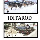 IDITAROD: Using Technology to Draw, Write, & Publish: Grades 2-4