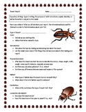 Insect Informational Report Writing Sheets, 12 Total Pages!