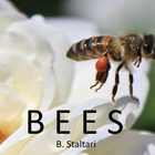 Insects - Facts about Bees