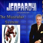 JEOPARDY! The Muscular System