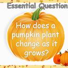 "Journey's Unit 2 Trade Book ""From Seed to Pumpkin"" PowerPoint"