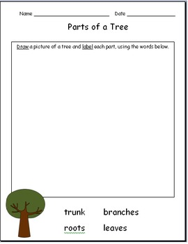 Kindergarten Tree Unit