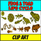 Frog lifecycle Clip Art