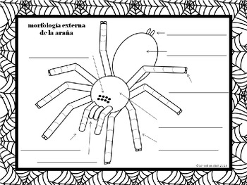 Label a Spider ~ Etiquetar la araña [Dual Immersion]