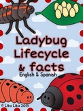 Ladybug life cycle and facts
