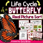 Life Cycle of a Butterfly {Real pictures to sort, printabl