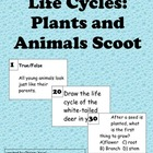 Life Cycles:  Plants and Animals Scoot