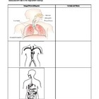 Literacy and Science - Human Body Systems (4 - 6)